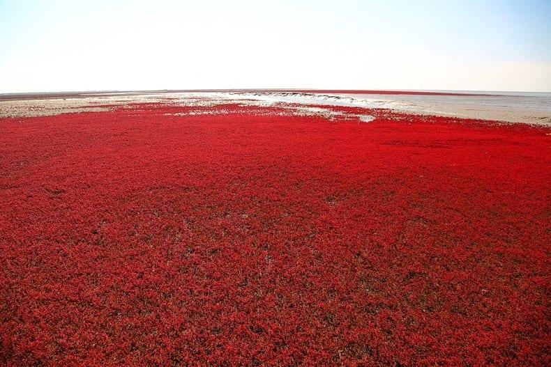 panjin-red-beach-62