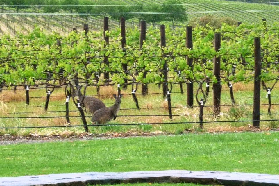 Australian wine exporters