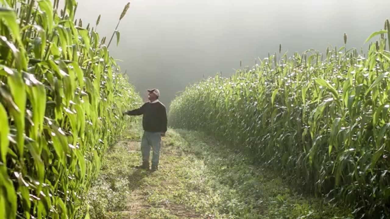 farming at Hampton